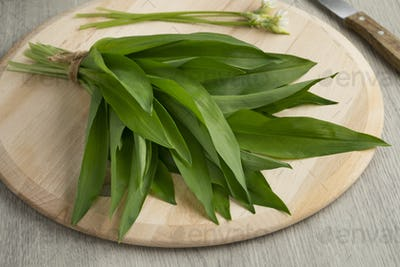 Fresh picked bunch of ramsons leaves