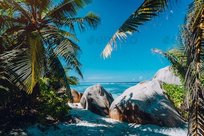 Famous tropical beach Anse Source d'Argent natural palm shade, granite boulders, La Digue Island