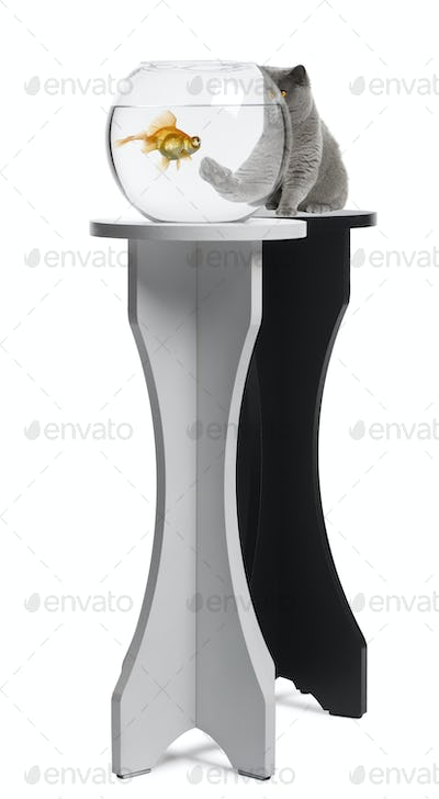 Cat looking at a fish in an aquarium on stand against white background