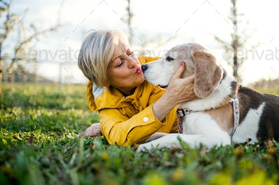 Front view of senior woman lying on grass in spring, kissing pet dog.