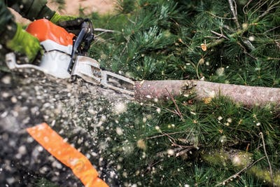 Close-up of lumberjack with chainsaw cutting a tree, midsection