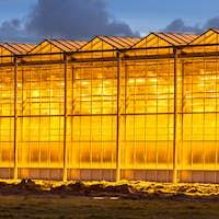 Illuminated industrial greenhouse crop