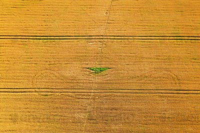 Aerial photo flying over yellow grain wheat field