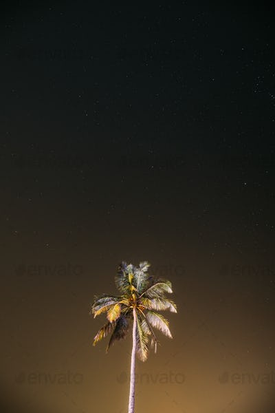 Goa, India. Real Night Sky Stars. Coconut Tree Palm On Background Of Natural Starry Sky