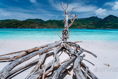Panorama of exotic tropical island with clear turquoise lagoon and dry tree on white sand beach