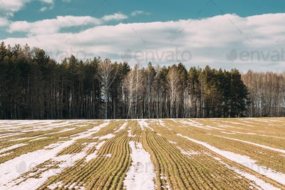 Spring Plowed Field Partly Covered Winter Melting Snow Ready For New Season. Ploughed Field In Early
