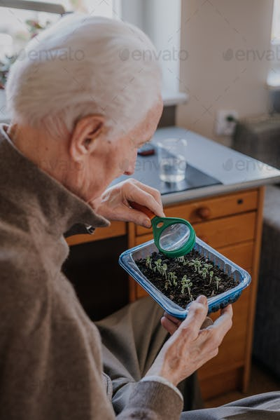 Senior observes sprouts of green vegetables