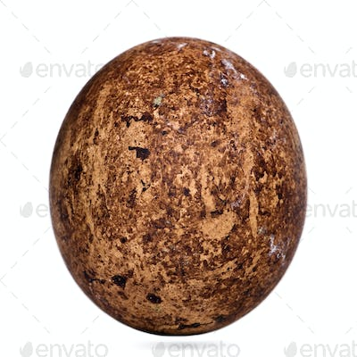 Egg of Caracaras Southern in front of white background