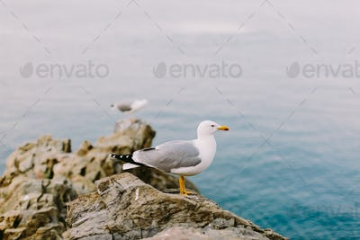 beautiful seagull on the rocky beach
