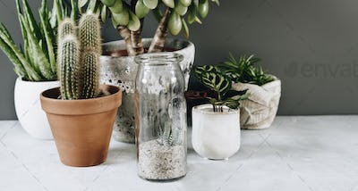 Collection of various cactus and succulent plants