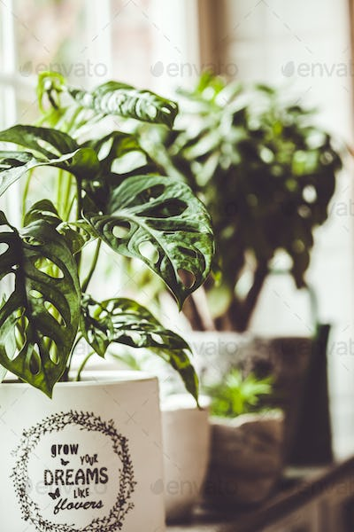 Potted green plants on window. Home decor and gardening concept
