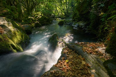 Fallen Leaves on Limestone Rock on the Bank of a River