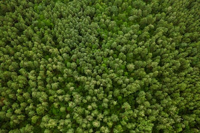 Aerial View Of Green Forest Landscape. Top View From High Attitude In Summer Evening. Natural