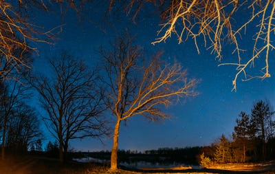 Night Sky Stars Above Oak Trees In Early Spring. Natural Starry Sky Above Woods. European Nature