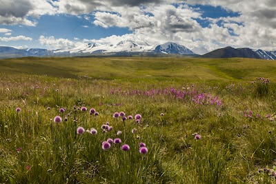 Field of wild flowers and mountains on the background