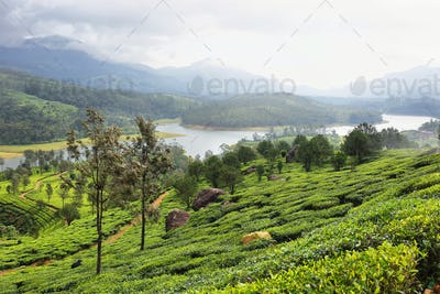 Lake view of the Anayirankal Dam surrounded by tea plantations, Kerala, India