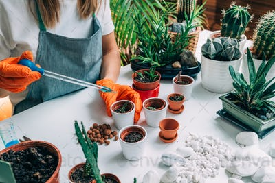 Table with Potted Plants at Home