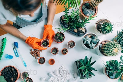 Gardening and Planting at Home