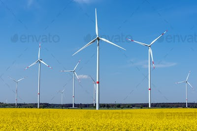 Wind wheels and a flowering canola field