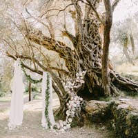 elegant wedding arch in olive trees park