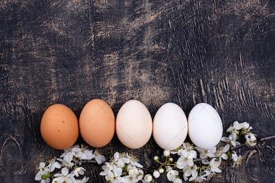 Chicken eggs gradient from light to dark