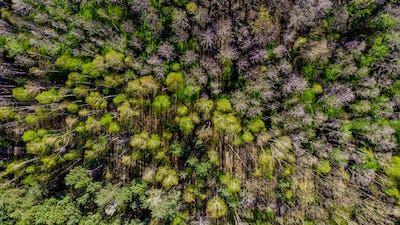 Fresh Green Foliage in Forest at Spring. Aerial Drone View