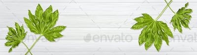 Banner of Flat lay composition of green leaves with dew drops on white wooden table