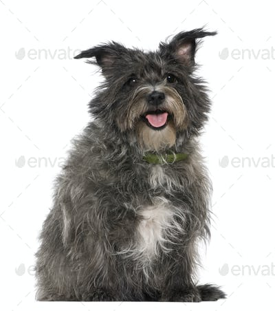 Mixed-breed, 8 years old, sitting in front of white background