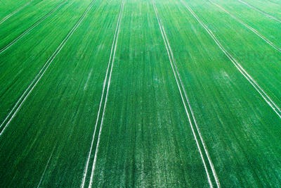 Aerial photo flying over green grain wheat field
