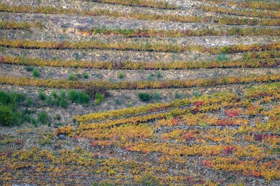 Rows of Terraced Vineyards form Parallel and Diagonal Lines