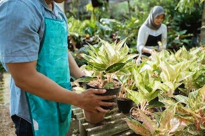 gardener inspect of his plants