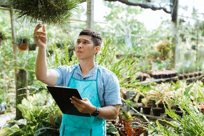 florist inspects quality and growth of green plant