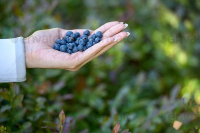 Hand of young woman holding fresh blueberries outdoors