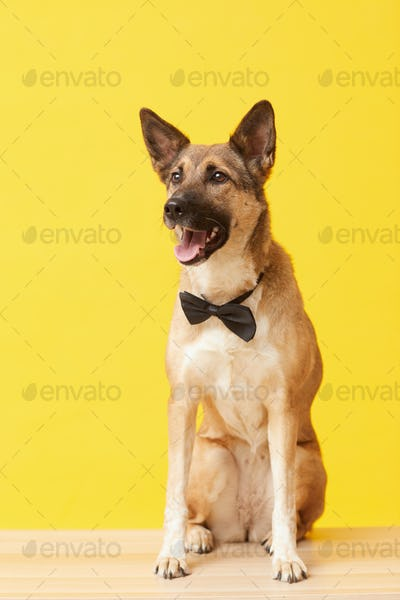 Beautiful dog in necktie