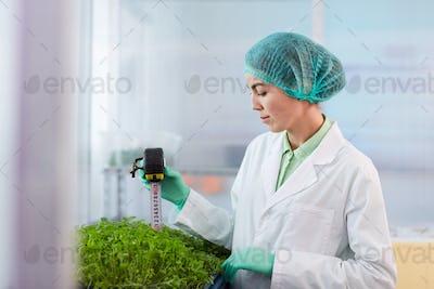 Woman measuring the plants