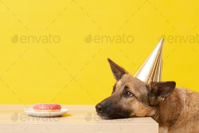 Birthday cake for dog
