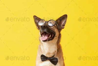 Funny dog in eyeglasses
