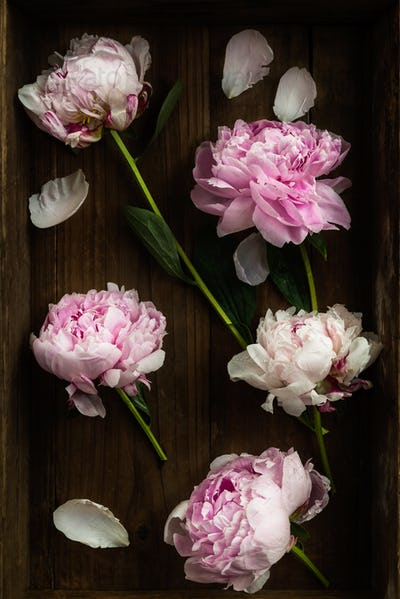 Fresh bunch of pink peonies on Old Wooden Rustic Tray