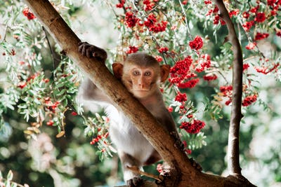 Cute little monkey sits on the tree