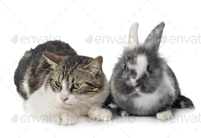 dwarf rabbit and cat