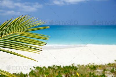 Palm Leaf And Caribbean Beach, Antigua