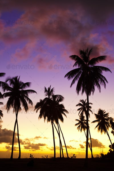 Colorful Caribbean Sunset And Palm Trees, Antigua