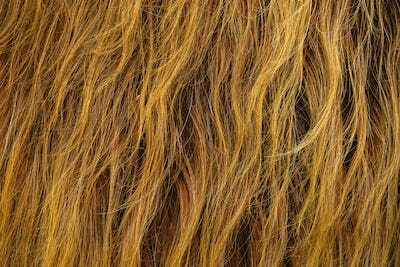 Wild Highland Cow Hair