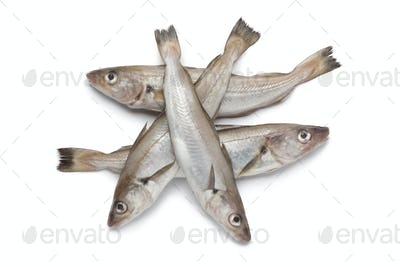 Fresh raw whiting