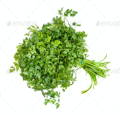 bunch of fresh Chervil herb isolated on white