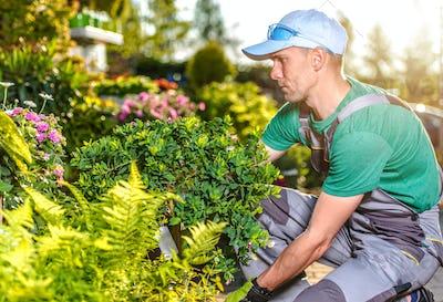 Male Gardener Takes Care Of Yard Landscape.