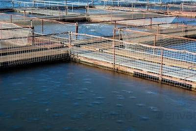 Fish farm for brooding sturgeons in Astrakhan, Russia