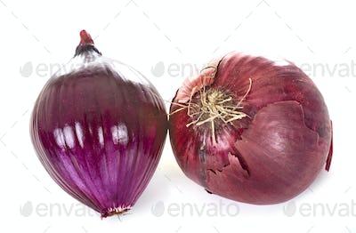 red onion in studio
