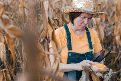 Female corn farmer using digital tablet in cornfield, smart farming