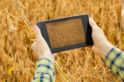 Farmer using tablet computer for inspecting soy at field